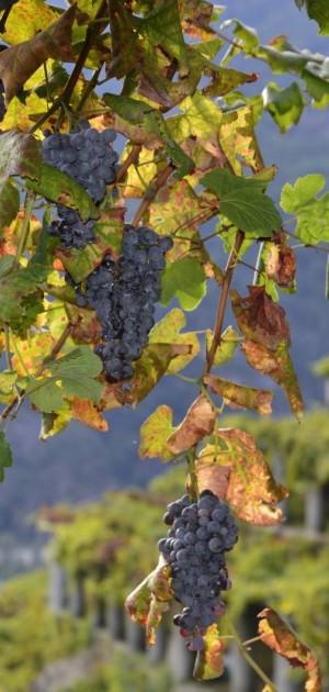 In Piemonte, la Strada dei vigneti alpini: un itinerario per scoprire territori d'eccellenza